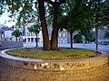 Tree at U Rathaus Spandau 2019-06-16 02.jpg