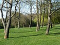 Trees on the golf course - geograph.org.uk - 2349626.jpg