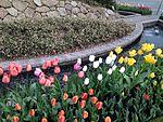 Tulip flowers in front of Hakata Entrance of Hakata Station.JPG