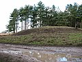 Tumulus in Seven Hills Plantation - geograph.org.uk - 1733065.jpg
