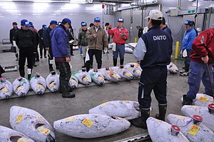 Narita Wholesale Market - Tuna auction at the market, November 2009