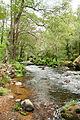 Umia River by Caldas de Reis, Galicia, Spain-7.jpg