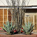 Urban cacti (25561345375).jpg