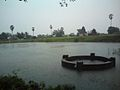 Vedal pond and temple.jpg
