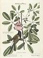 Verzameling van uitlandsche en zeldzaame vogelen (Tab. LXXIV) (7894230666).jpg