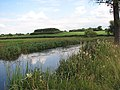 View across the flood plain of the River Wensum - geograph.org.uk - 894007.jpg