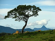 View from Ambewela, Sri Lanka.jpg