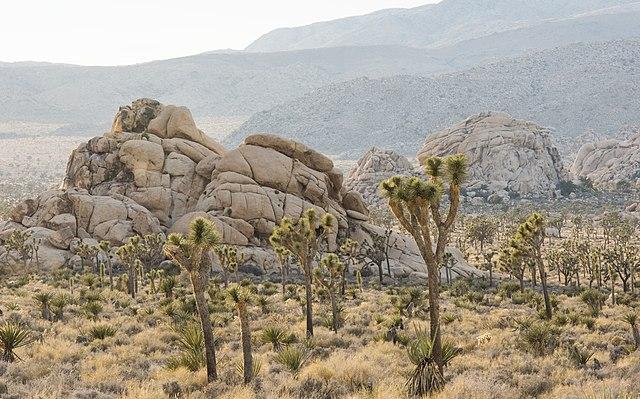 Camping - San Bernardino County
