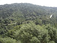 View of the Forest Reserve Banam located in Bouzareah Algiers Sporting a kiss.jpg