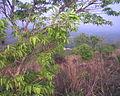 Vilangan Kunnu Image146.jpg