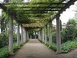 Villa la pietra, giardino est, pergolato.JPG