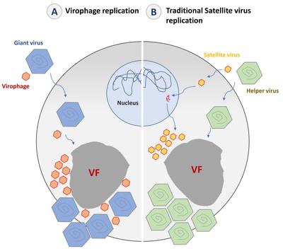 vírusok 2 llare 300 pare fahéj kezelés paraziták ellen