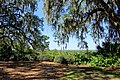 Vista - Bok Tower Gardens - DSC02226.jpg