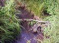 Vlasina 4km od brane2.jpg
