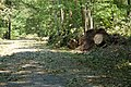 WE entrance road (6096614451).jpg