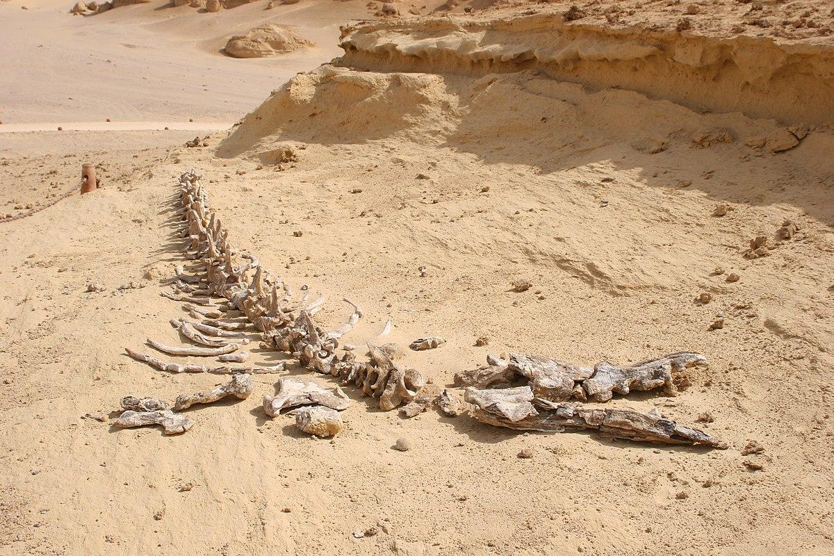 وادي الحيتان في مصر 1200px-Wadi_Al_Hitan1