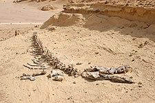 Wadi Al Hitan1.jpg