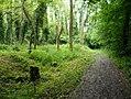 Waldweg - panoramio - JoernB.jpg