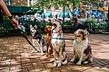 Walking Dogs (Unsplash).jpg