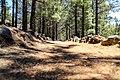 Wanderweg durch Pinienbäume in der Nähe vom Vulkan Chinyero auf Teneriffa, Spanien (48225242632).jpg