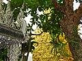 Wat Rong Khun (White Temple) - By Chalermchai Kositpipat - Chiang Rai - Thailand - 08 (34438212604).jpg