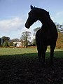 Wauldby Manor Farm.jpg