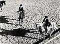 Werner Haberkorn - Corrida de cavalos 2.jpg