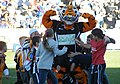 Wests Tigers mascot (26 April 2009).jpg