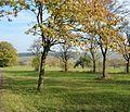 Wiese - panoramio (2).jpg
