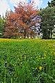 Wiese im Schlosspark Augustusburg.jpg