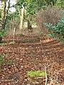 Wild Garden - geograph.org.uk - 322118.jpg