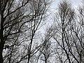 Wiosna w Białobrzegach - panoramio (4).jpg