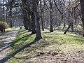 Wiosna wystartowała ,-)) 14 - panoramio.jpg