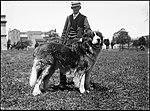 Wolfhound (4903286983).jpg