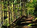 Wood - panoramio (5).jpg