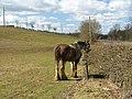 Woodend horse. - panoramio.jpg