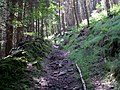 Woodland footpath above Ladybower Reservoir - geograph.org.uk - 473241.jpg