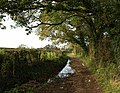 Worthy Lane - geograph.org.uk - 1025033.jpg