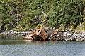 Wreck At Diabeg - panoramio.jpg