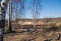Yaroslavsky District, Yaroslavl Oblast, Russia - panoramio (13).jpg