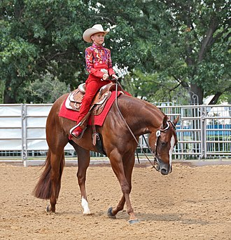 Equitation - A western equitation rider