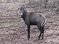 Zoo des 3 vallées - Animaux - 2015-01-02 - i3389.jpg