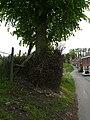 Zottegem Erwetegem Steenbergen 4 Welkomstlinde (4) - 193085 - onroerenderfgoed.jpg