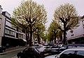 Zottegem Heldenlaan Gekandelaarde platanen (1) - 190542 - onroerenderfgoed.jpg