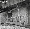 """""""Preša"""" na ovna v vinogradu Štrajbuz, Mali Ban 1956.jpg"""