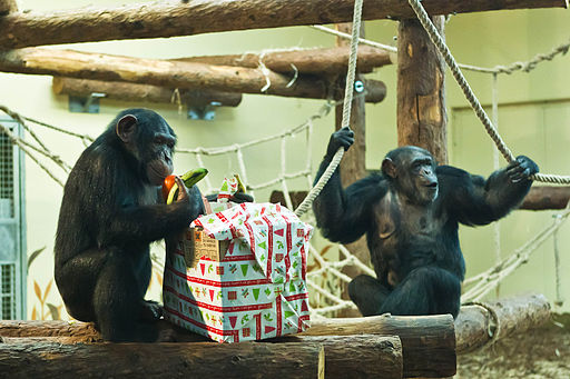 Állatok Karácsonya cs