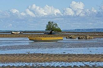 Corumbau Marine Extractive Reserve - Image: Árvore mange na maré baixa em Cumuruxatiba