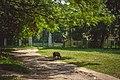 Антонінський парк. с. Антоніни.jpg