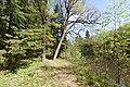 Весенний лес в парке Сергиевка.jpg