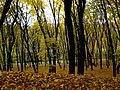 Голосіївський лісопарк в Києві (10).jpg
